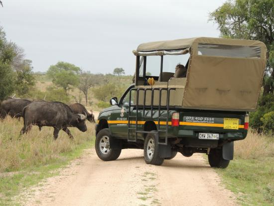 Tambuzi Safaris