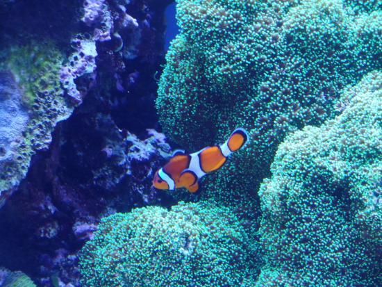 8 Picture Of Monterey Bay Aquarium Monterey Tripadvisor