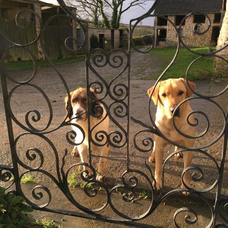 Petrockstowe, UK: Hartley and Fidget