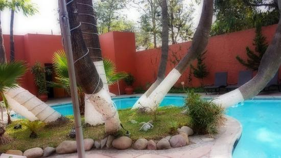 Palacio Azteca Hotel : amazing trees by the pool
