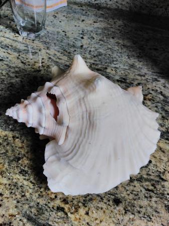 Bimini: Esto es una concha