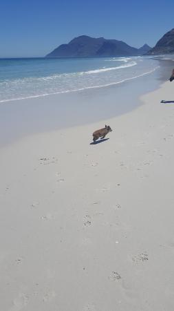 Kersefontein Guest Farm: Kelly on the Noordhoek beach (150km from Kersefontein)