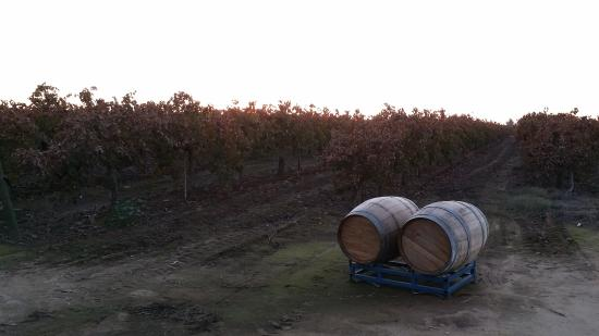 Sanger, CA: Vineyard