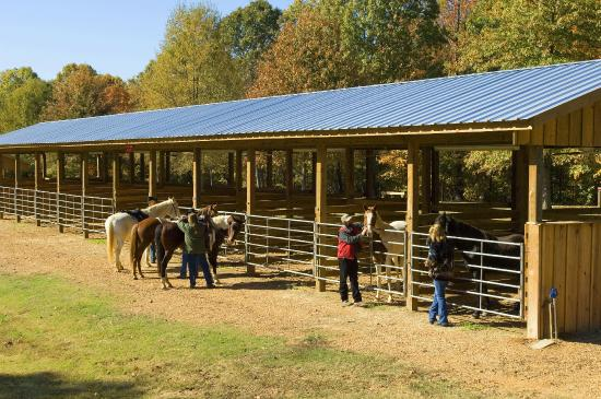Arkansas: Horses and fall color in the equestrian camp