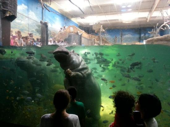 Awesome Experience Picture Of Adventure Aquarium Camden
