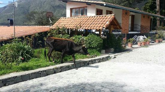 Photo of Posada Parador de Los Pinos Merida