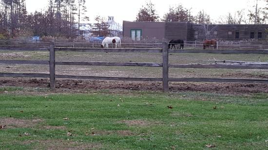 Sheridan, IL: Horses Stable
