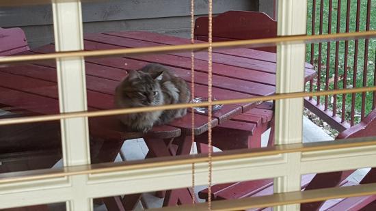 Sheridan, IL: Cat Plague  cat1