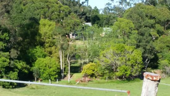 Bendles Cottages & Villas : Looking onto the Cottages