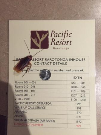 Pacific Resort Rarotonga: killed this sucker after it dropped from the ceiling onto my wife's face
