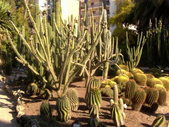 Jardin Botanico Cactus Picture of Jardin Botanico Valencia