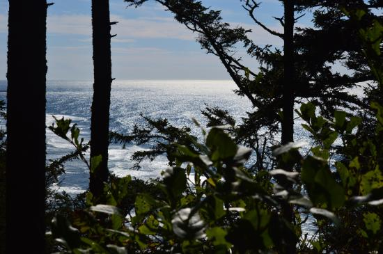 Ilwaco, Waszyngton: View of Pacific on trail to Lighthouse