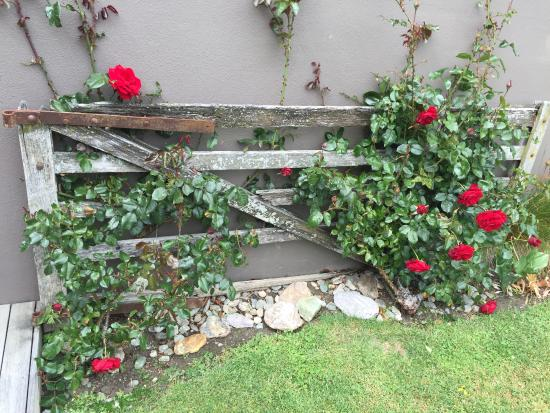 Mt Rosa Lodge: Roses just outside the honeymoon suite.