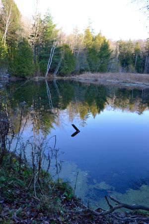 King City, Kanada: Lake reflection