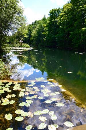 Walters Falls, Kanada: Lily pads upstream