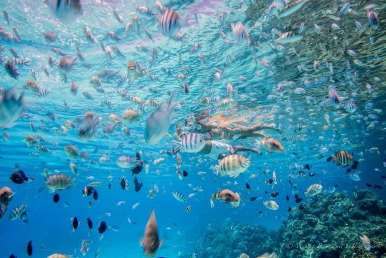 Bora Dream Pictures & Lagoon Tours : Perfect coral garden in Bora Bora