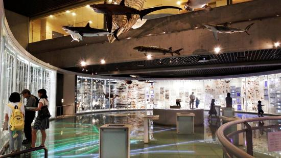 Minerals found in Japan - Picture of National Museum of ...