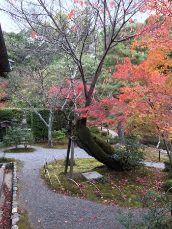 Toji-in Temple: 紅葉