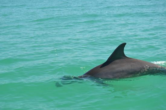 Sian Ka'an Jeep: dolfijnen