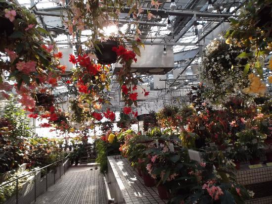 Hiroshima Botanical Park: 温室