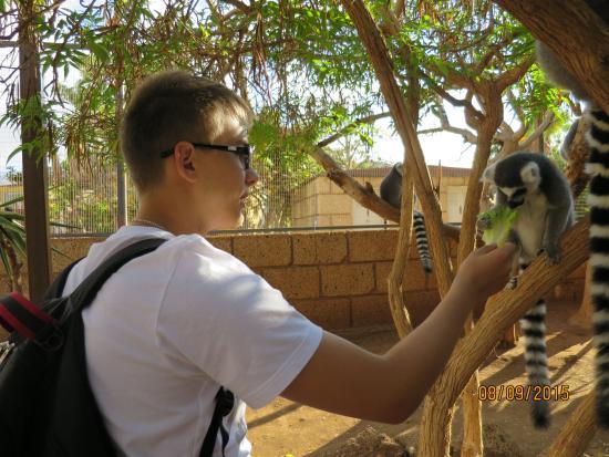 Monkey Park: Лемур