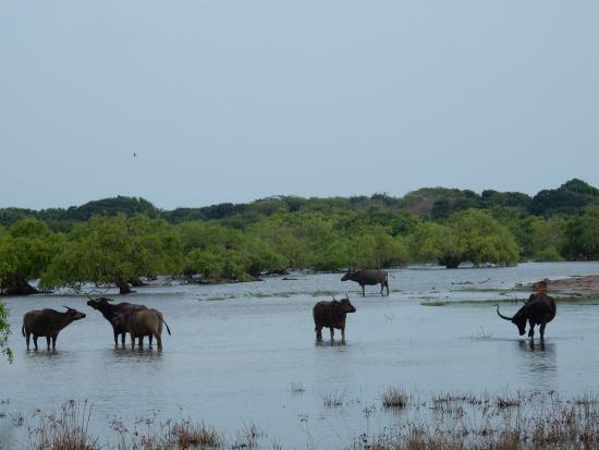 Bentota, Sri Lanka: Safari