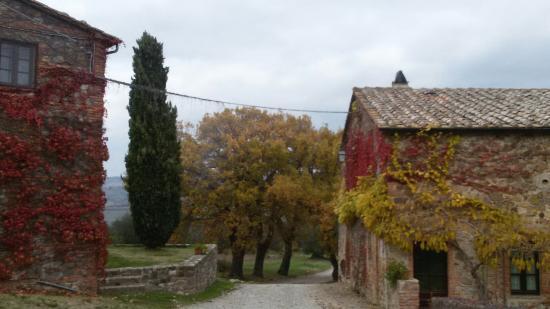 Contignano, Italia: 20151205_161914_large.jpg