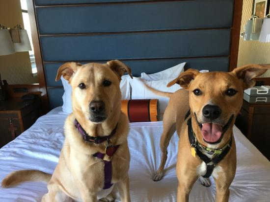 Monaco Baltimore, a Kimpton Hotel: Pet Friendly!
