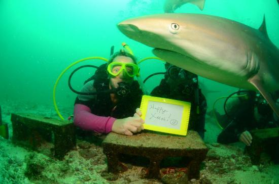 Simpson Bay, St. Maarten-St. Martin: photobombed by a shark!!!!!!!!!