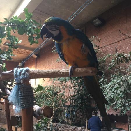 Washford, UK: Blue and gold macaw waving hello
