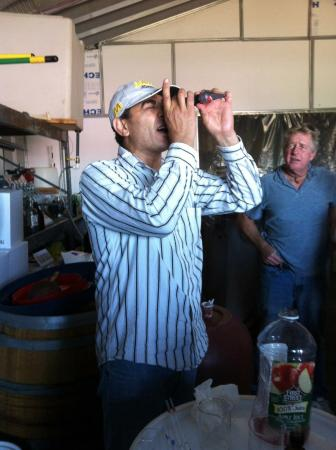 Ramona, Kalifornien: Measureing must levels (sugar) in wine grapes