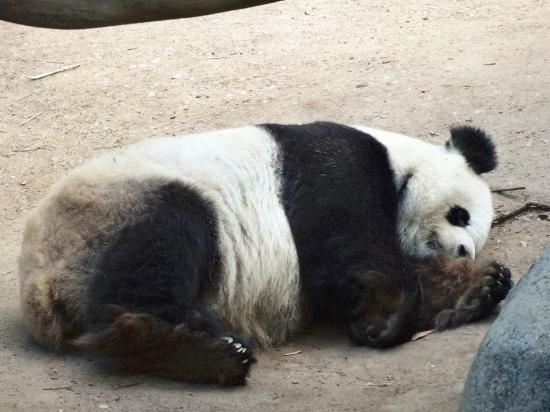 profile diego panda country restaurant