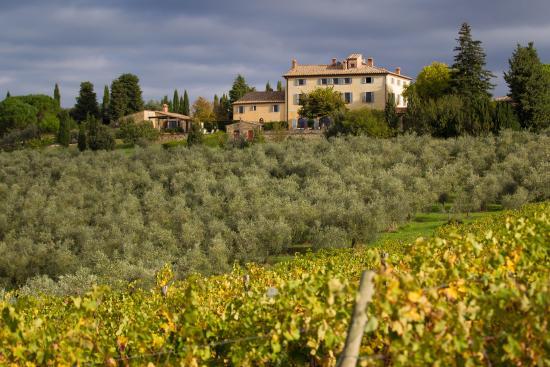 Terre di Nano: Vy över vinodlingarna och gården