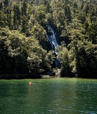 Fiordland Expeditions - Day Tours
