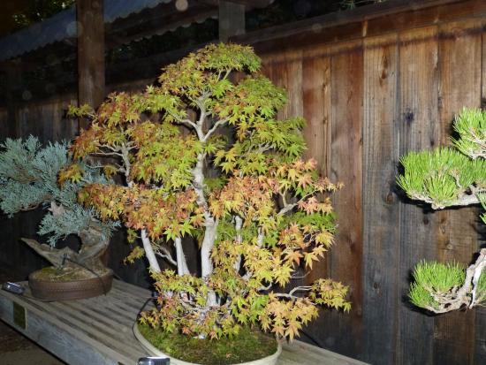 Bonsai Garden Festival Of The Lights October 2015 Picture Of Gsbf Bonsai Garden At Lake