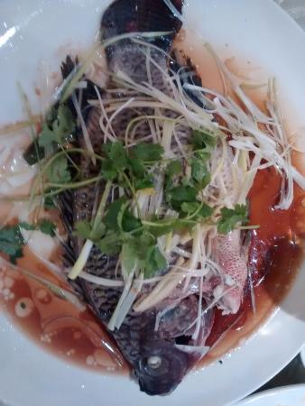 Steamed Tilapia Picture Of Golden Rice Bowl Edmonton