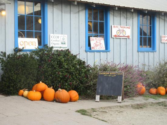 Swanton Berry Farm, Davenport, Ca