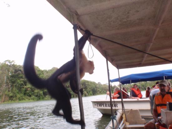 Panama Canal Boat Eco Tour: photo3.jpg
