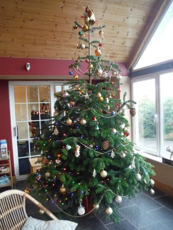 Glendine Irish Home : Christmas tree