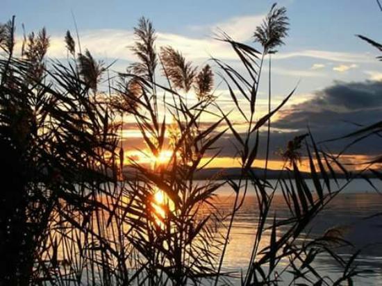 Torricella di Magione, Ιταλία: Il nostro lago ..il nostro pesce....