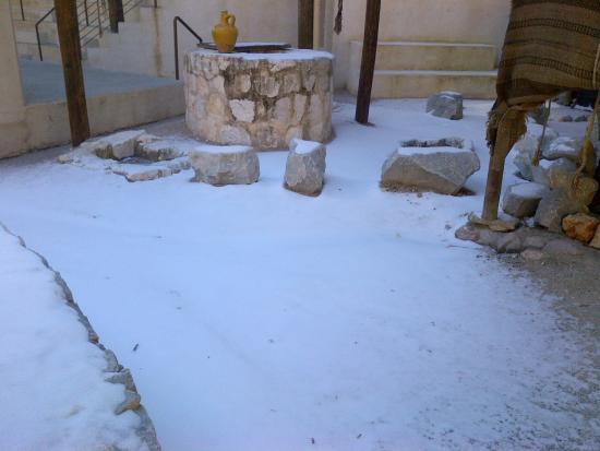 LaGrange, GA: Snow in the garden!