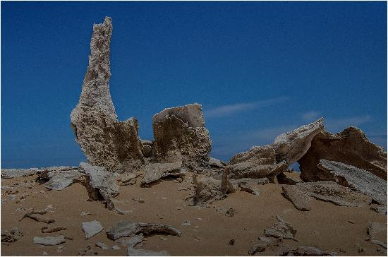 Calcified Forest