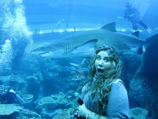 Picture of dubai aquarium amp underwater zoo dubai