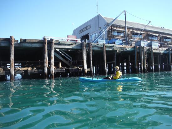 Central Coast Kayaks: kayak under the dock to see the sea lions up close and personal