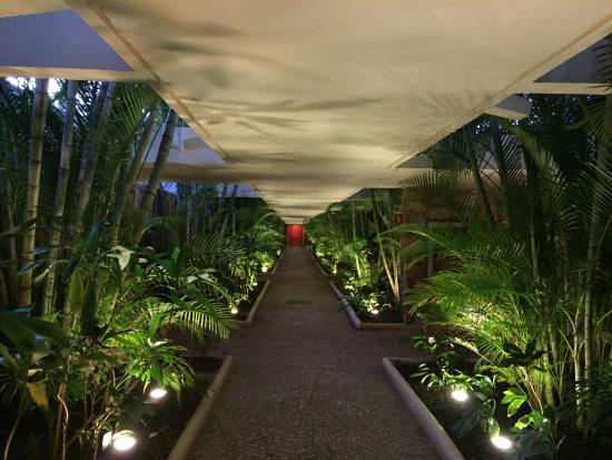 Presidente Inter-Continental Cozumel Resort & Spa: Jungle-ish corridor of the hotel