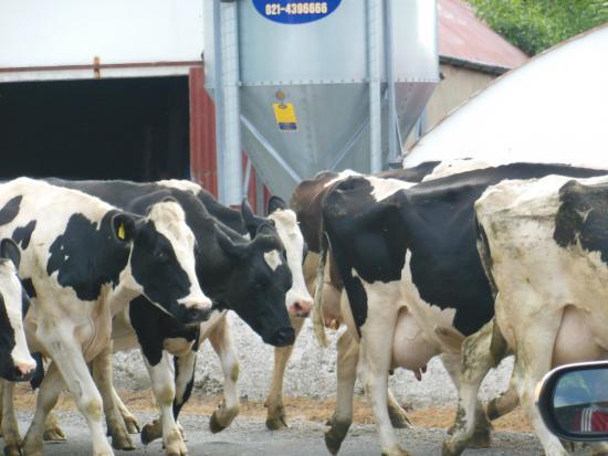 Oeste de Irlanda, Irlanda: CASTELEGREGORY, מחוז KERRY, דרום מערב אירלנד