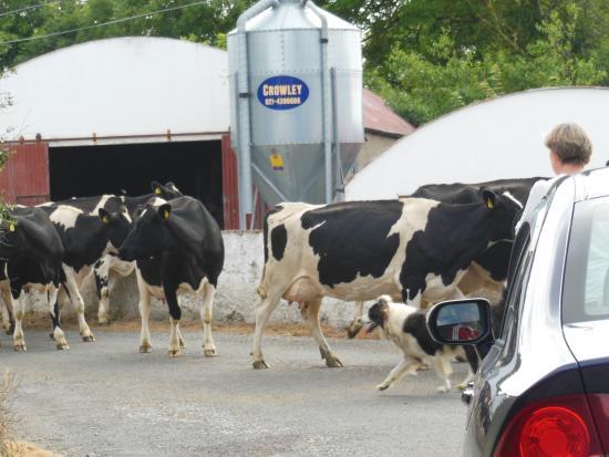 Western Ireland, İrlanda: CASTELEGREGORY, מחוז KERRY, דרום מערב אירלנד