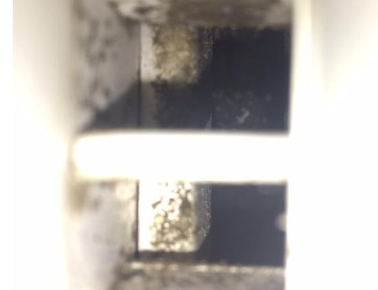 Staybridge Suites Orlando Airport South: Black mold