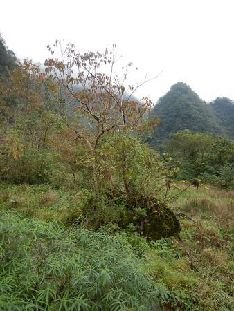 Libo County, Китай: 6