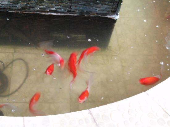 Tamago: Рыбки в фонтане
